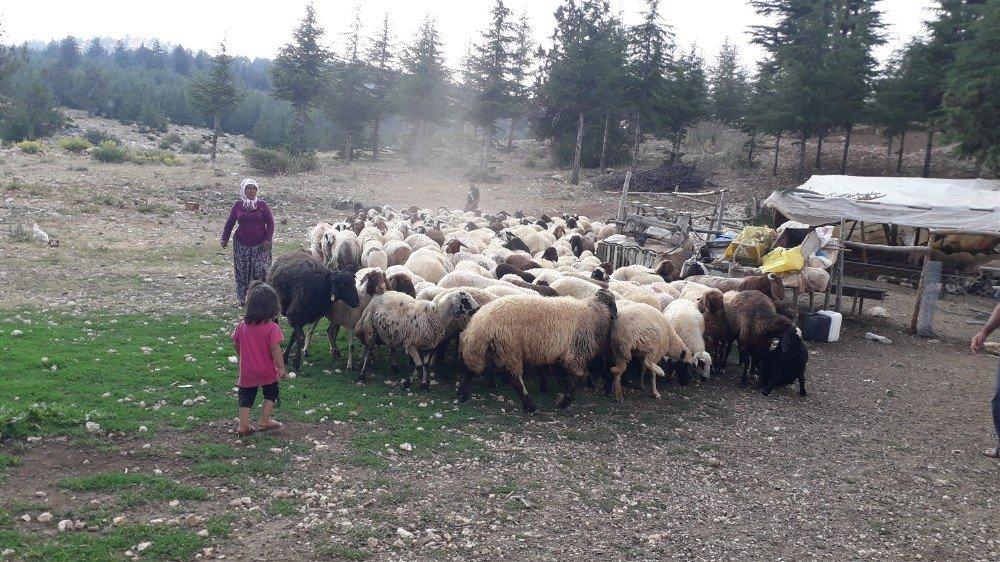Mersin'de Orman Köylüsüne 8 Milyon 700 Bin Tl Kredi Desteği Verildi