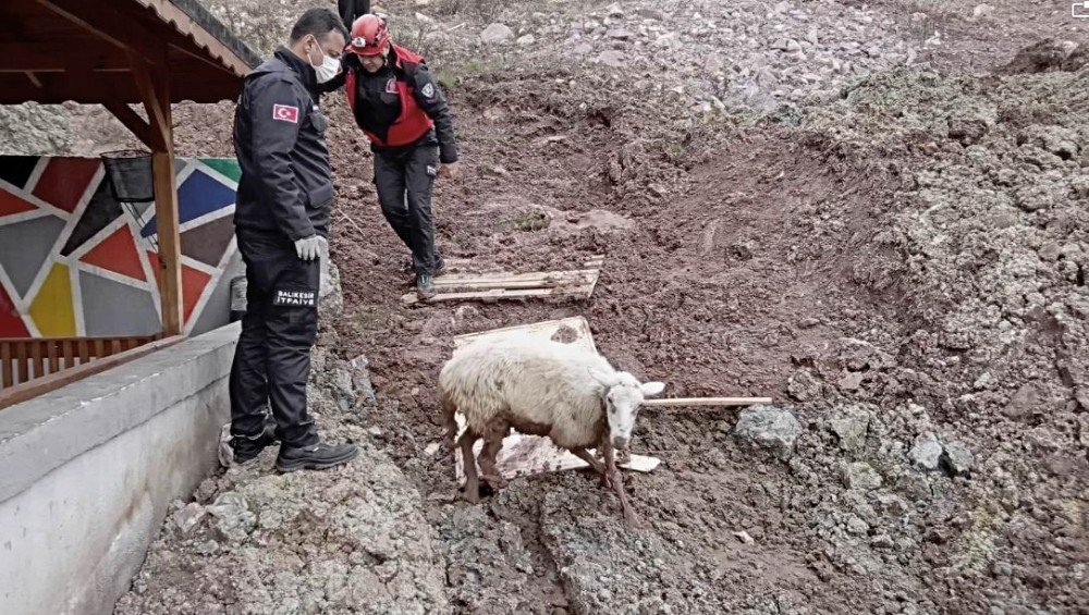 Edremit'te İtfaiyenin Kuzu Kurtarma Operasyonu
