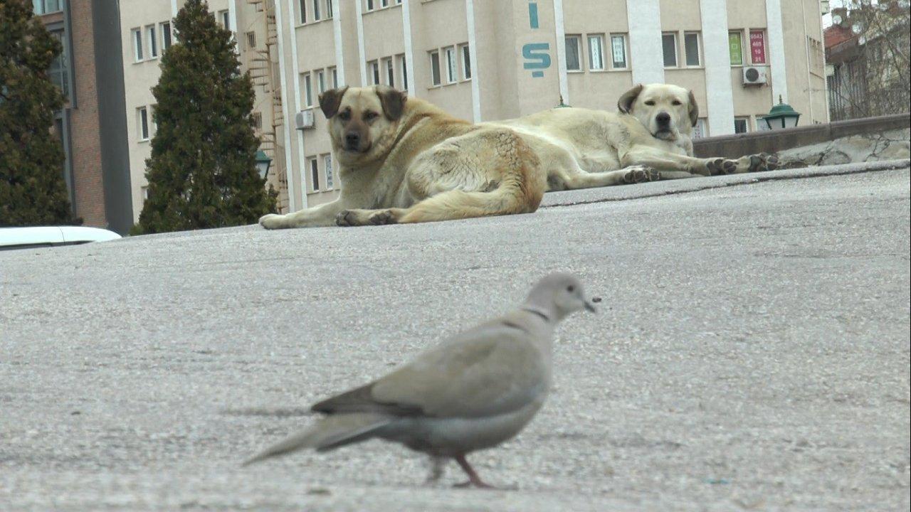 Dünya Sokak Hayvanları Günü'nde Meydanlar Sokak Hayvanlarına Kaldı