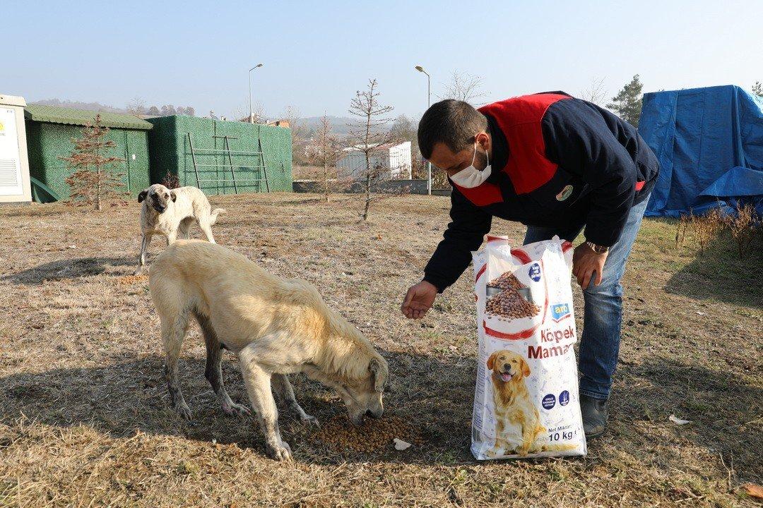 İ̇lkadım'da Kısıtlamada Sokak Hayvanları Unutulmadı