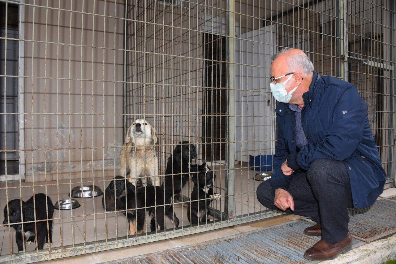 Başkan Kayda, Barınaktaki Hayvanlarla İlgilendi