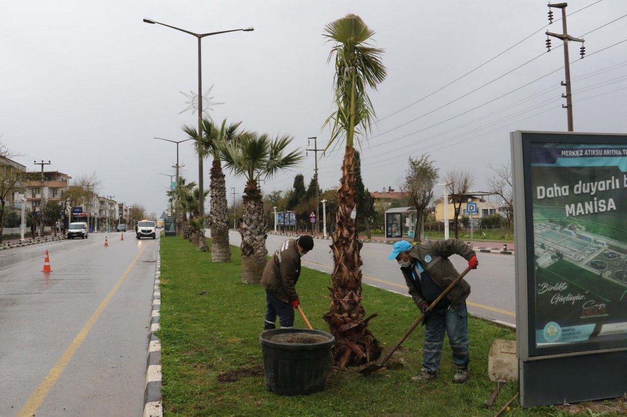 Devrilen Ağaçların Yerine Yeni Ağaçlar Dikiliyor