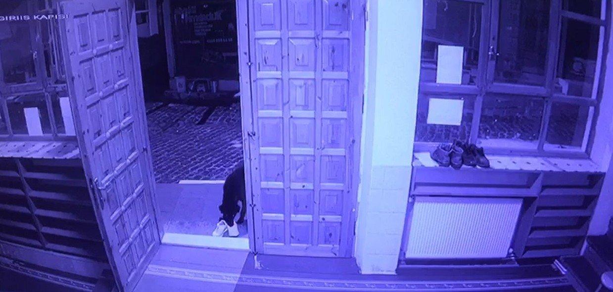 Cami Cemaatinin Ayakkabısını Çalan Sevimli Hırsız Kameraya Yakalandı