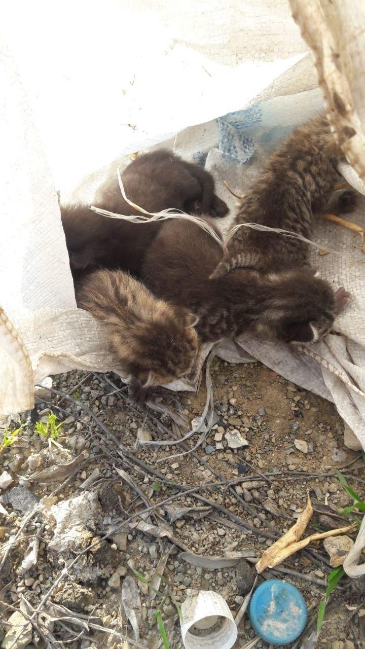 Bursa'da Çuvala Konulan Yavru Kediler Ölmekten Son Anda Kurtarıldı