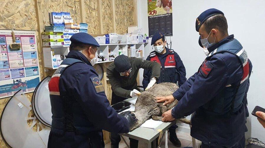 Çaya Düşen Karacayı Jandarma Ekipleri Kurtardı